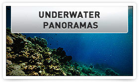 Take An Underwater Tour